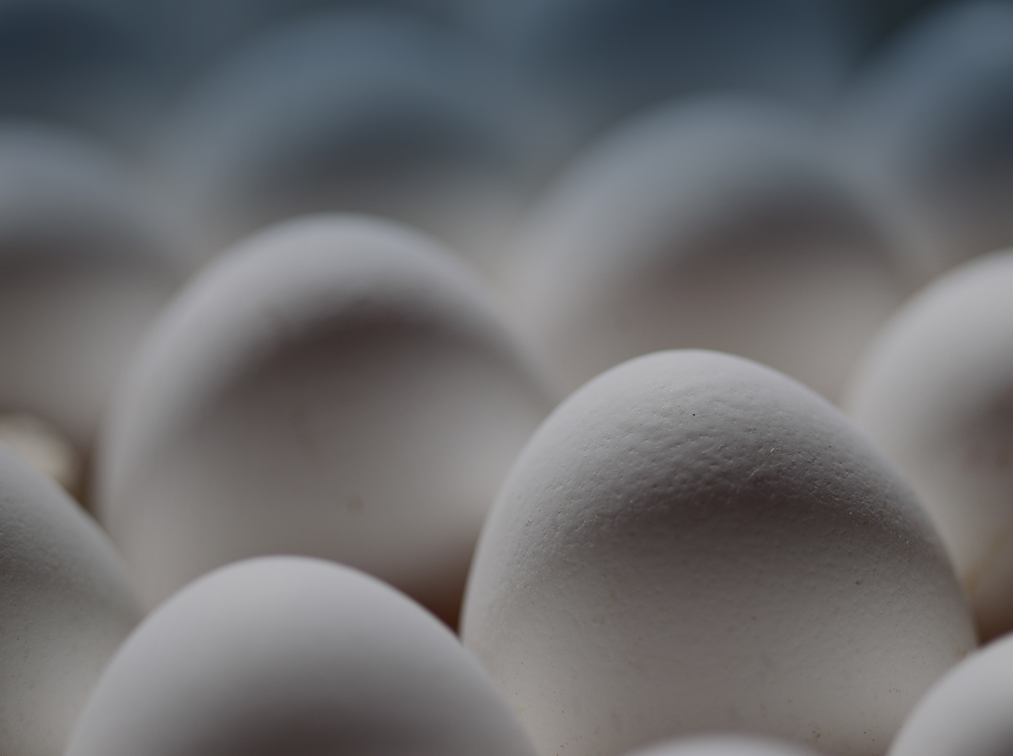 EGG PRODUCTION 4-th PLACE IN RUSSIA